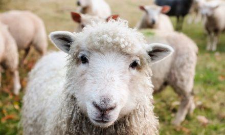 Kruip uit je schapenvacht